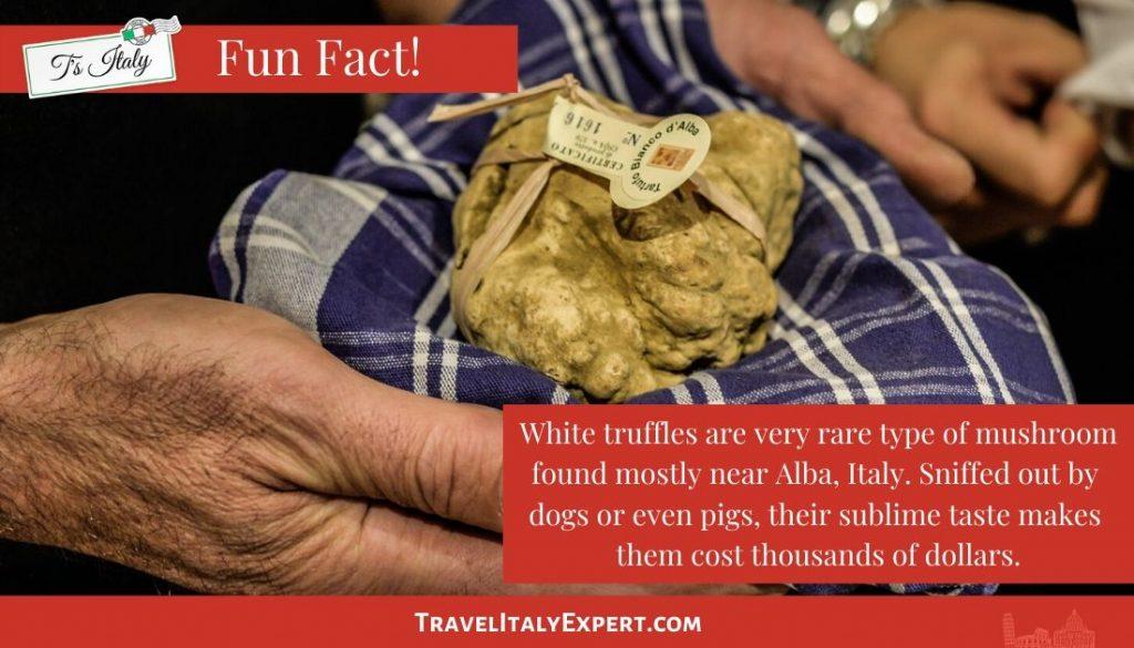 White Truffle Fun Fact